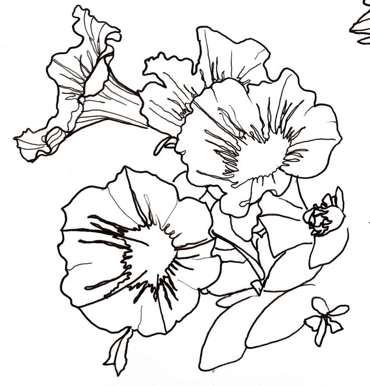Line Art Nature : Line drawing flowers drawings pinterest nature