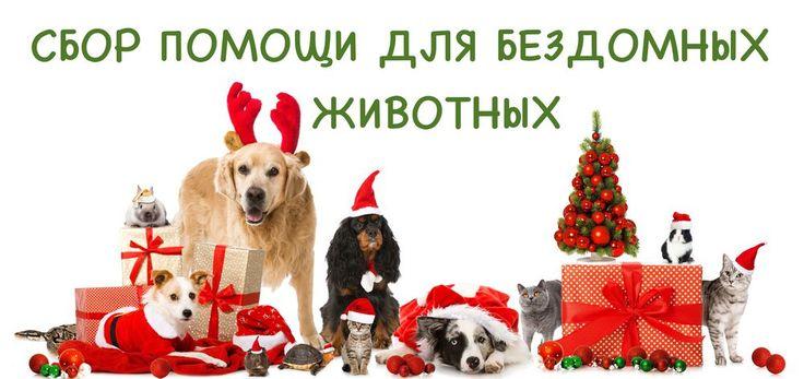 приют для животных, приют для животных москва, собака приют