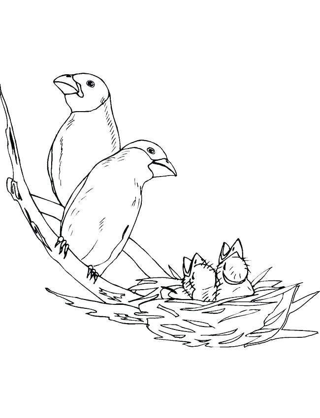 Pin On Coloring Pages Bird Nest