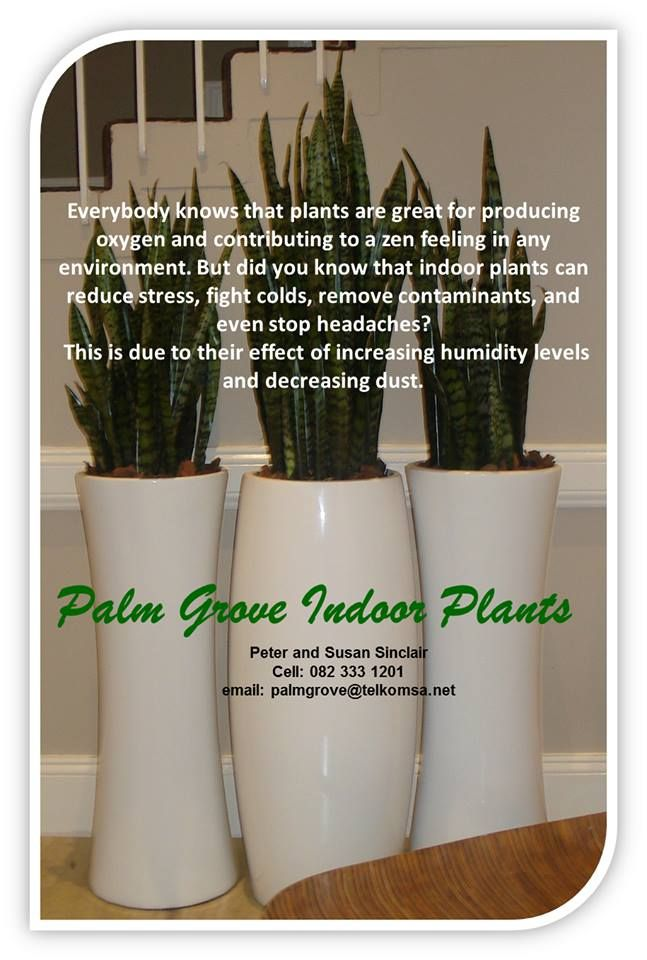 Palm Grove Indoor Plants. Plants produce oxygen and decrease dust while creating a zen environment and reducing stress!