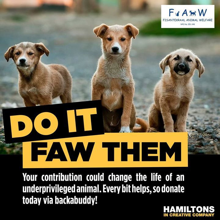YOU can be the someone that makes a difference! Help us with our clinic surgery (for sterilisations and injuries) to make a difference to the animals of Fisantekraal.  Donate through Back-A-Buddy - local AND international: https://www.backabuddy.co.za/champion/project/faw80-ride  OR  Donate directly into our account: Nedbank - Fisantekraal Animal Welfare - Cheque account - Acc no: 1039094171 – Branch no: 10 39 10 (Tygervalley) Ref: FAWRIDE  THANK YOU to the amazing folks at Hamiltons In…