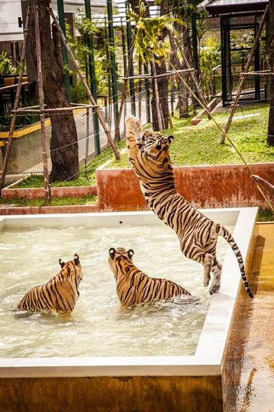 Tiger Kingdom Phuket, might as well put this on my list as well. =]