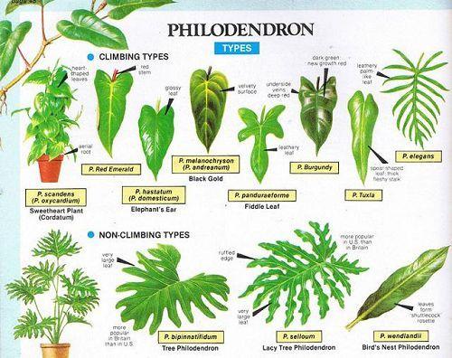 17 migliori idee su piante ufficio su pinterest - Piante per ufficio ...