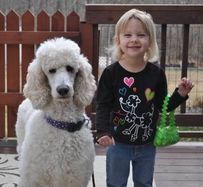 Happy adopted poodle and her new friend =) Pickets Poodle Rescue.