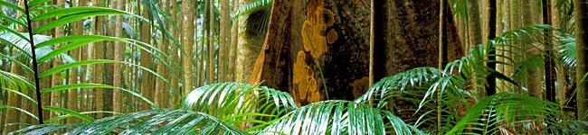 39 Best Images About Australian Rainforests On Pinterest