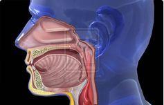 PURIFICACION DE AIRE AIRLIFE MUNDIAL te dice ¿qué provoca la Faringitis? La faringitis es una enfermedad altamente contagiosa causada por el grupo A de bacterias estreptococo. Los Institutos Nacionales de Salud informan que la faringitis es la infección bacteriál de garganta más común. Los síntomas que incluyen dolor de garganta, náuseas, fiebre y escalofríos generalmente aparecen entre dos y cinco días desde la exposición. . http://airlifeservice.com/