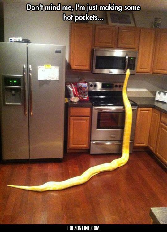 Kitchen Snake#funny #lol #lolzonline