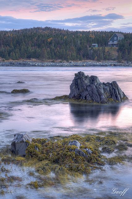 Kelp, Rocks and Water - Newfoundland, Canada