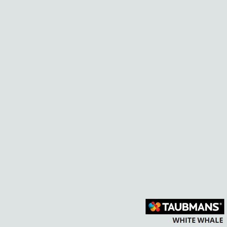#Taubmanscolour #whitewhale
