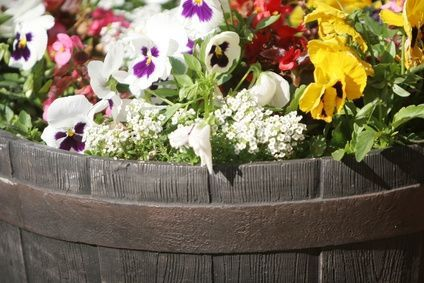 How to Arrange Flowers in a Wine Barrel Planter thumbnail