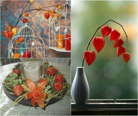 Lampionblume Physalis von der Herbstdeko nicht wegzudenken
