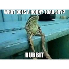What Does A Horny Toad Say? funny lol humor funny pictures funny pics funny…