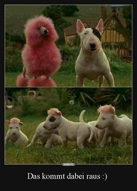 Das kommt dabei raus :) | Lustige Bilder, Sprüche, Witze, echt lustig