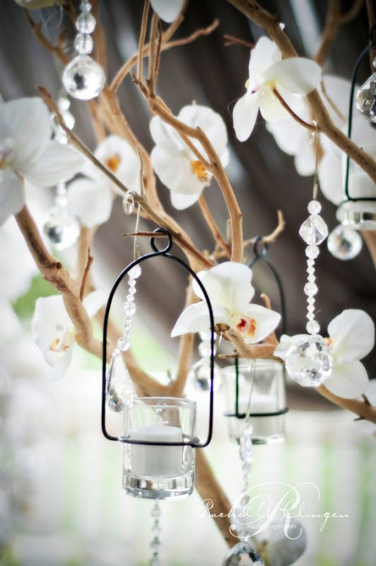 Hanging Orchids The Flowers Pinterest Weddings