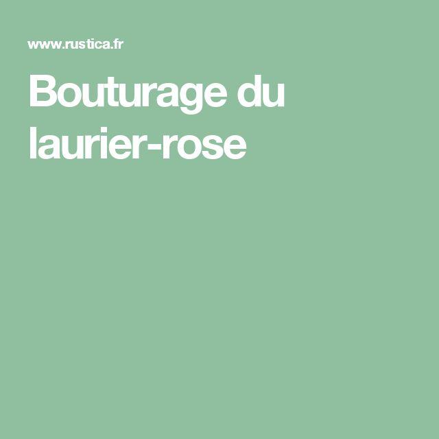 Bouturage du laurier-rose