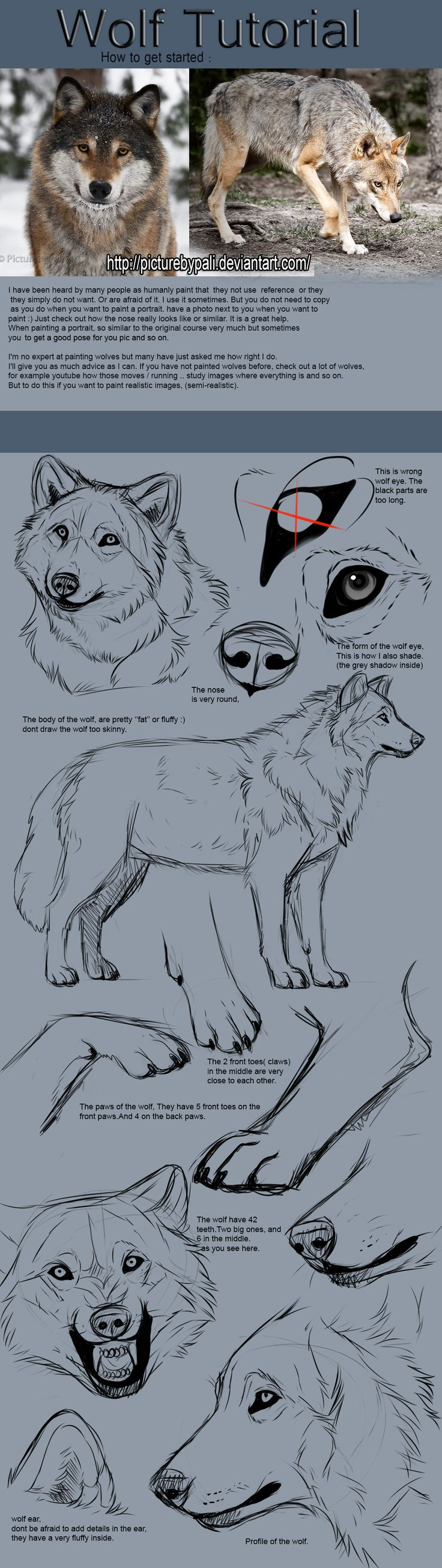 Wolf Tutorial by TheMysticWolf on Deviantart