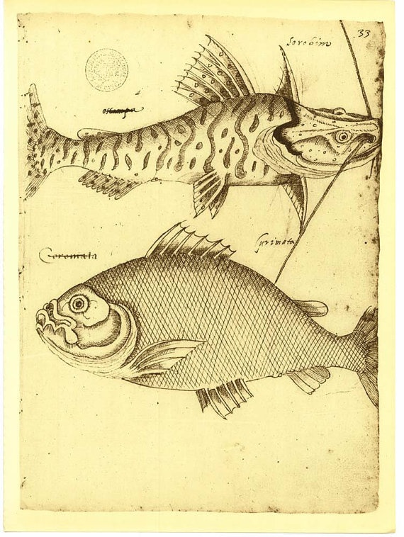 Sketch Drawing of Fishes of Maranhao Brazil by by CarambasVintage, $16.00