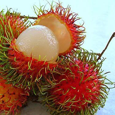 """Conocido en Ecuador como achotillo. Rambutan: Nativo del archipielago Malayo, el nombre de esta fruta es derivado de la palabra malaya que significa """"peludo"""". Una vez que le quitas la cascara la pulpa del rambutan es suave, carnosa, y deliciosa. su sabor es dulce algo ácido, muy parecido a la uva. A pesar que tiene su origen en el sureste de Asia, el rambutan ha sido importado al rededor del mundo, y ahora es un cultivo común."""