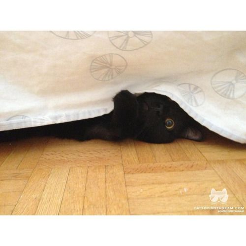 From @peter_simpson_big_beat: Baker (a.ka. The Large Black Cat) practices his super spy technique beneath the bed. Very interesting! #catsofinstagram [source: http://ift.tt/2f4bilq ]