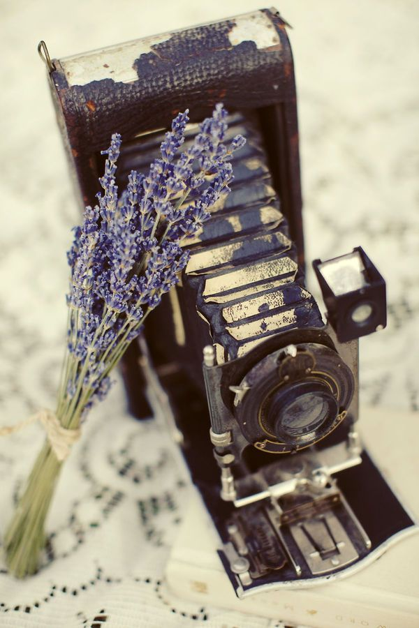 [Vintage Camera] What are those gorgeous flowers?