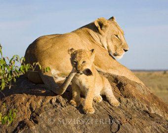 Baby Animal Nursery Art Print, Baby Animal Print, Animal Nursery Decor, Baby Animal Photo, BABY LION PLAYING Print, Safari Nursery, Lion Cub