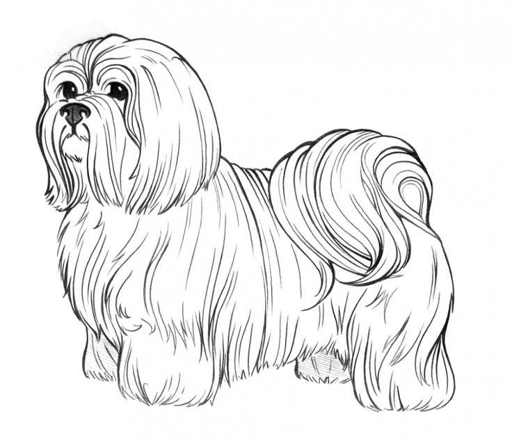 free coloring pages dog breeds | Dog Breed Coloring Pages | Shih Tzu | Pinterest