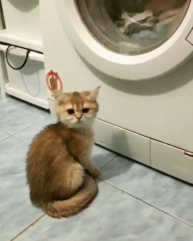 Kleine Süße ❤😍❤   – Katzen Gifs und Videos