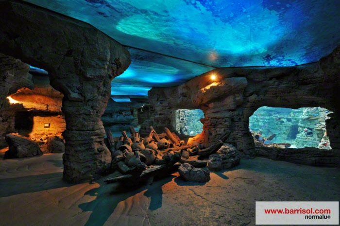 Palma Aquarium : ceiling aquarium of palma de mallorca medias more palm aquariums ...