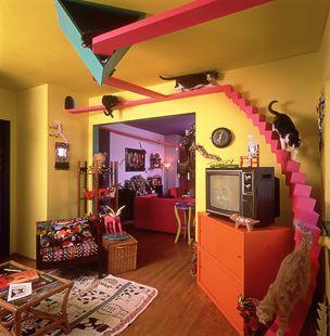 neat cat house: Crazy Cat Ladies, Cat Walks, Catwalks, Pet, Cat Rooms, Dreams House, Catroom, Cat Stuff, Cat House