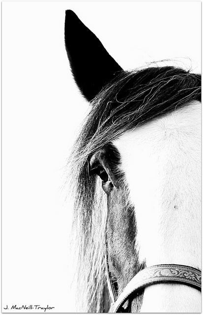 Gypsy horse - Woke up to see just this one morning.