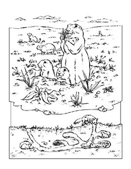 prairie dog and burrow coloring page from national geographic kids site for drawing reference