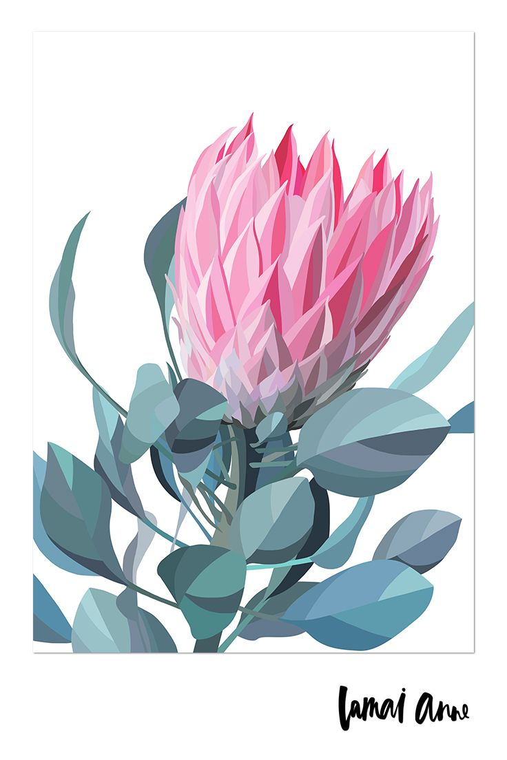 Pink Protea limited edition giclee art print by Australian artist Lamai Anne. Wh...