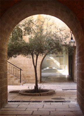 Olive Tree growing in the Cardo of the Old City Jerusalem