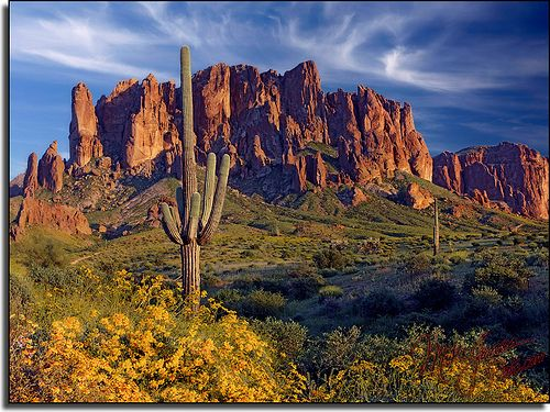 Arizona, Superstition Mountains, Saguaros, and Stupid Yellow Flowers, via Flickr.