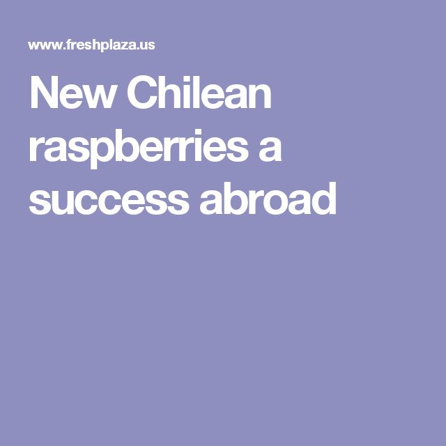 New Chilean raspberries a success abroad