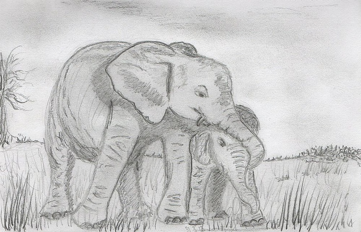 Spent an hour adding some more detail to my elephant sketch looks much better now...