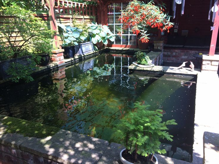 93 best koi pond for sale images on pinterest koi ponds for Koi pool for sale