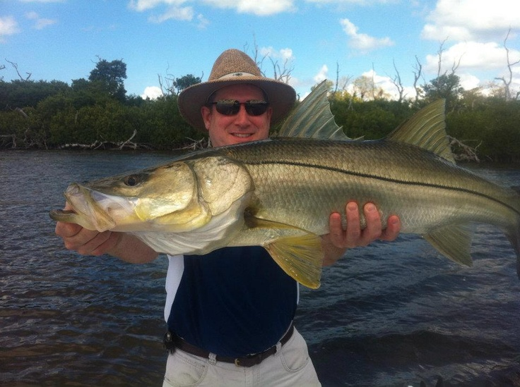 17 best images about snook on pinterest fish art mice for Snook fishing florida