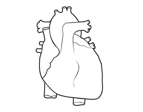 El sistema respiratorio y digestivo para infantil