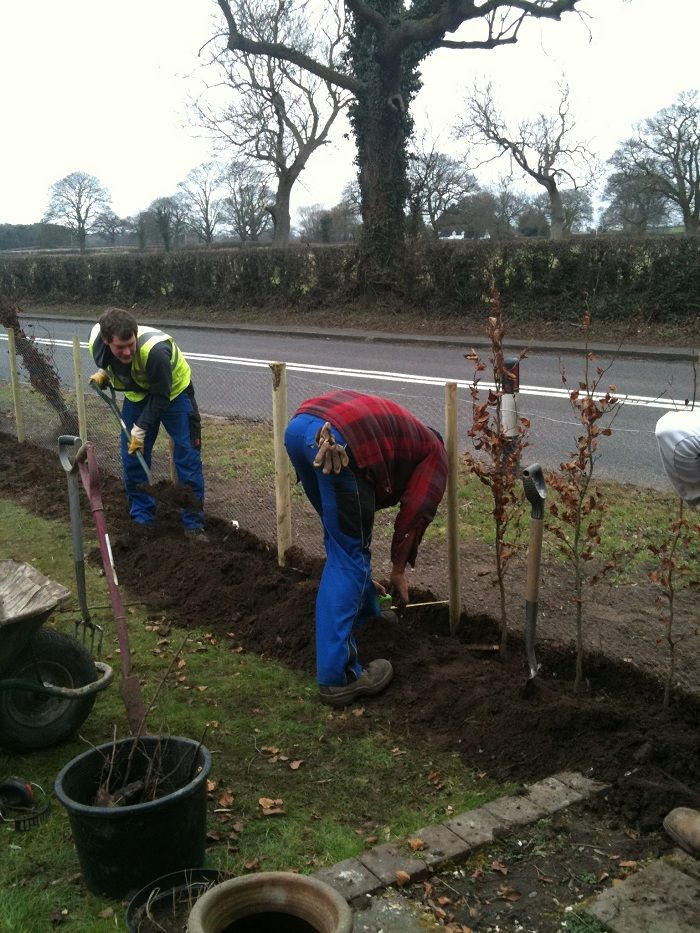 Hedge planting. Green beech (Fagus sylvatica) was chosen as it is native to Britain so does not look out of place in this rural setting www.ebgardendesign.co.uk
