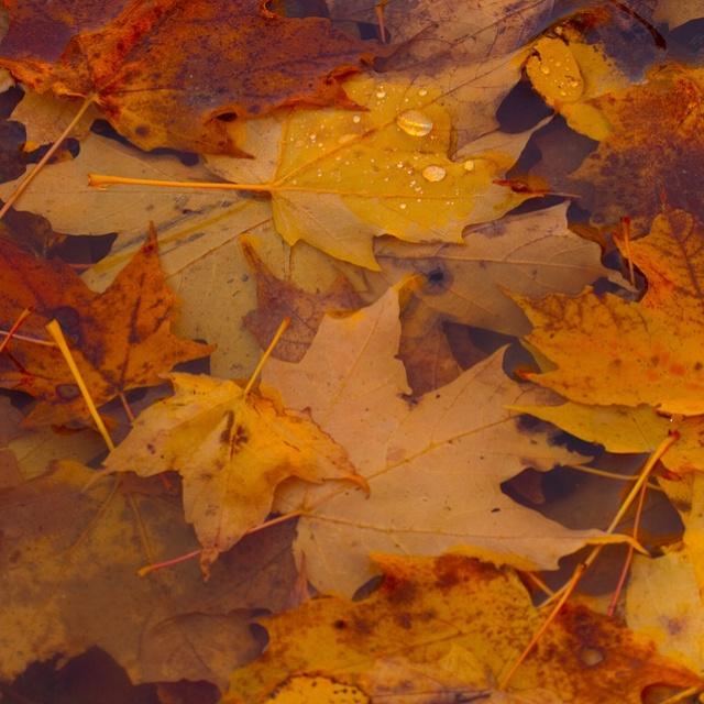 Fall in Presqu'ile Provincial Park, Brighton Ontario.
