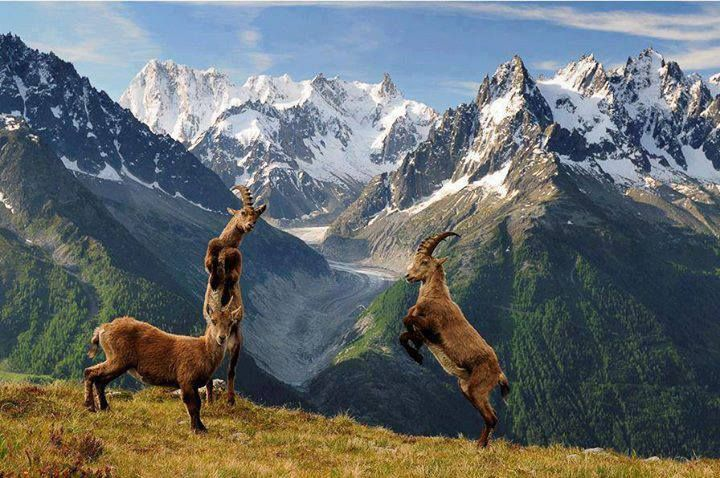 Wildlife of gilgit Valley Pakistan