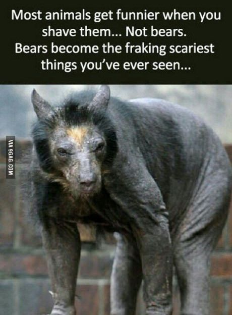 Bears, not a f**king joke!