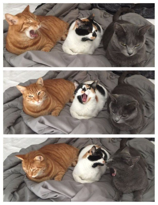 80 Funny Cat Pictures