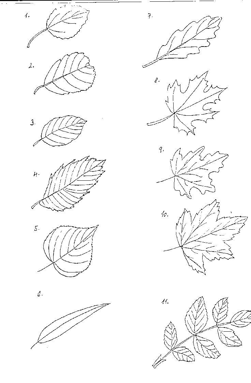 listy stromů přehled - Hledat Googlem