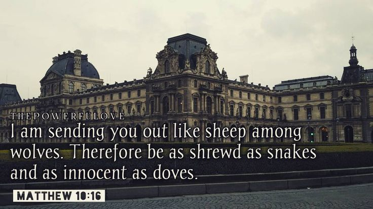 """Matthew 10:16 """"I am sending you out like sheep among wolves. Therefore be as shrewd as snakes and as innocent as doves."""" #love #instagood #tbt #beautiful #photooftheday #justgoshot #peoplecreatives #quotesoftheday #quotes #alkitab #bible #biblequotes #bibleverse #l4l #instacool #positive #positivevibes  #positivethinking #jesus #motivasi #motivationalquotes #motivation #inspiration #inspiring #inspirasi #inspirationalquotes  #bestoftheday  #pinterest #IFTTT #IFTTT"""
