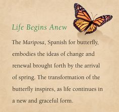 ... Pinterest | Butterfly Tattoo Meaning Tattoo Meanings and Butterflies
