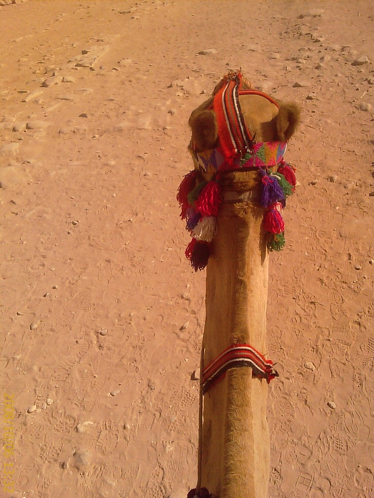 Proof I rode on a camel