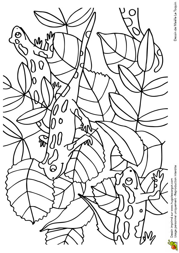 Coloriage cache cache feuilles salamandres sur Hugolescargot.com - Hugolescargot.com