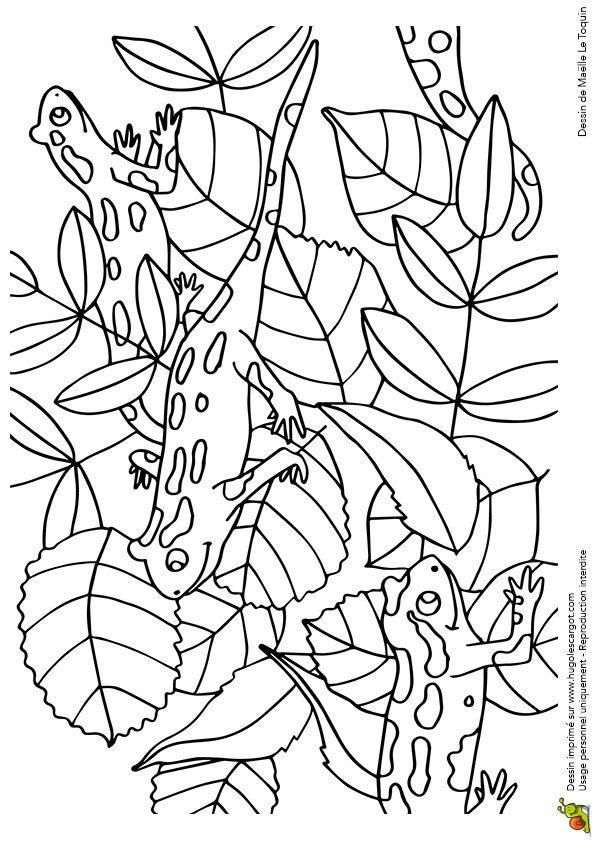 Cache Cache Feuilles Salamandres, page 15 sur 16 sur HugoLescargot.com